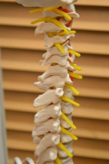 産後の骨盤矯正。始めるタイミング、回数、痛くないの?、トコちゃんベルトの使い方全て答えます
